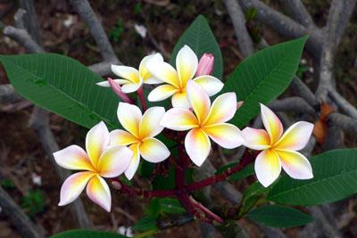 Тропические цветы фото названия